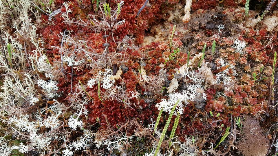 Wild Flowers of the Inca Trail, Peru