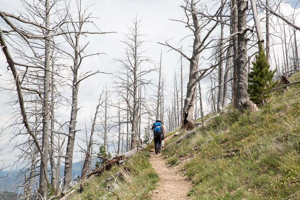 Hikers in Bunsen Peak Trail. Yellowstone national park