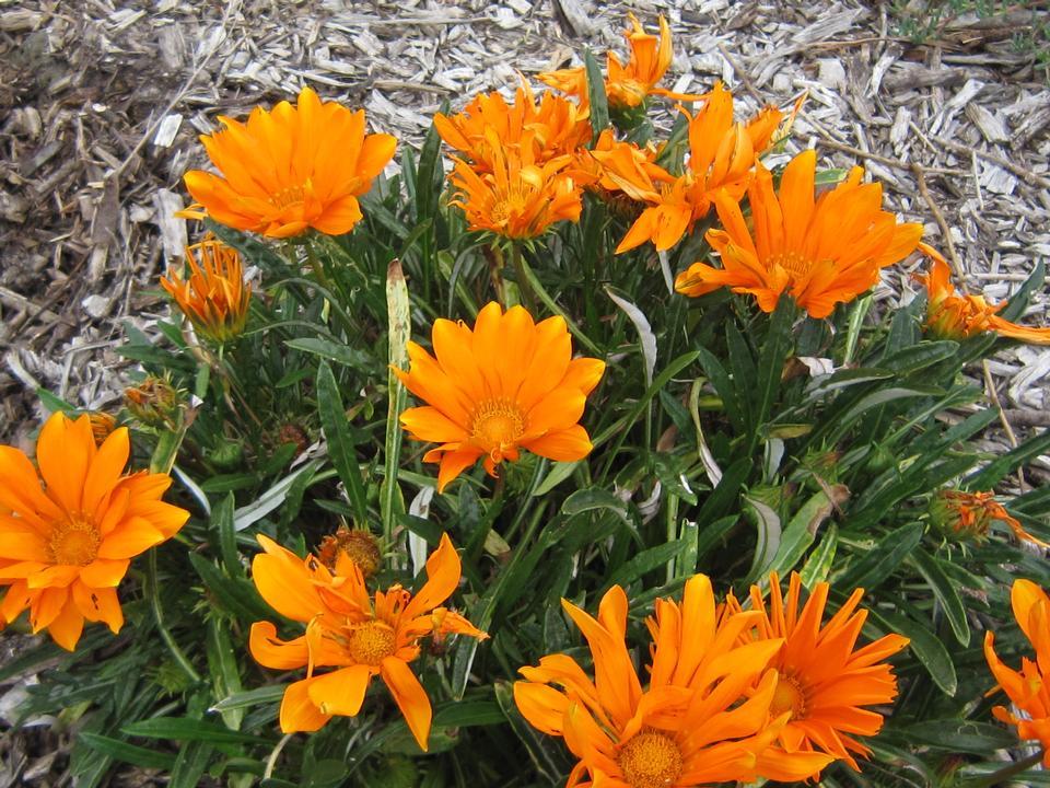 flower_orange_1