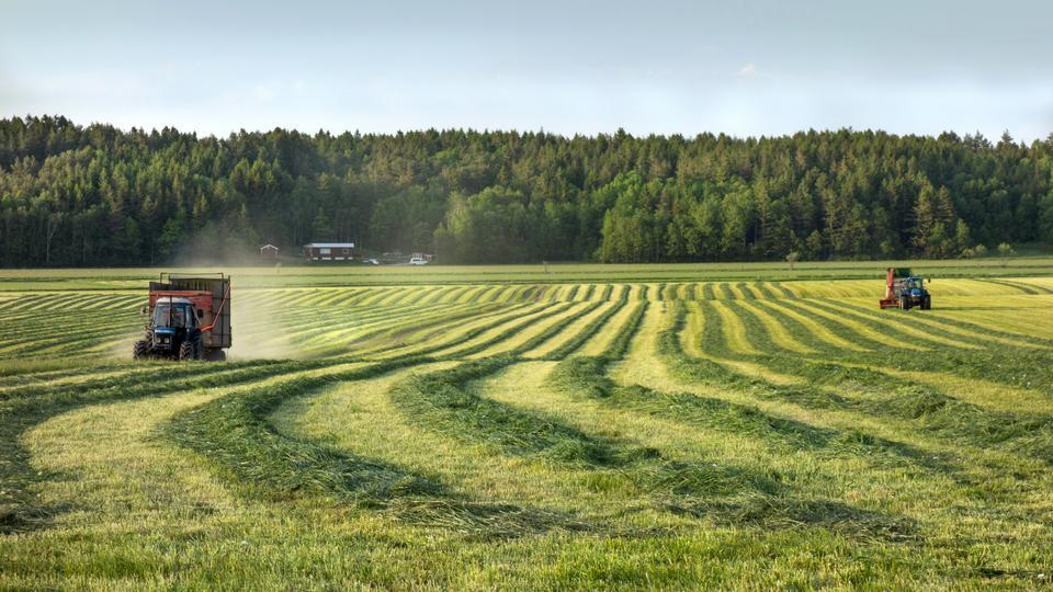 在一个领域的青贮饲料在Brastad,Lysekil自治市,Swed