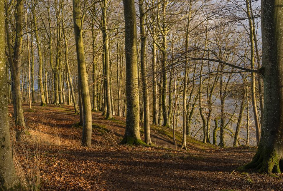 Trees landscape, winter light, along the Hald Lake