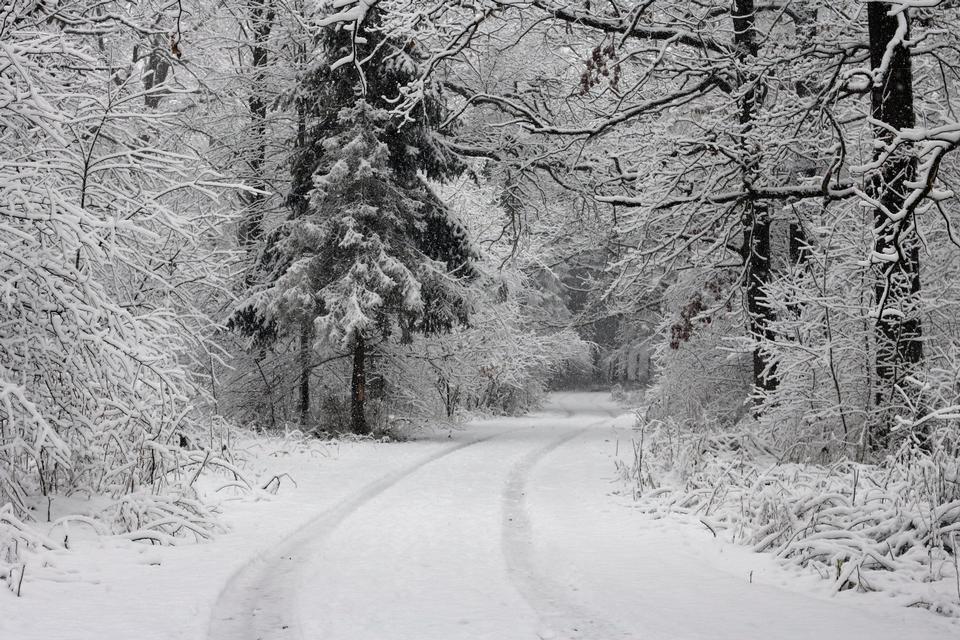 Forest road Slavne