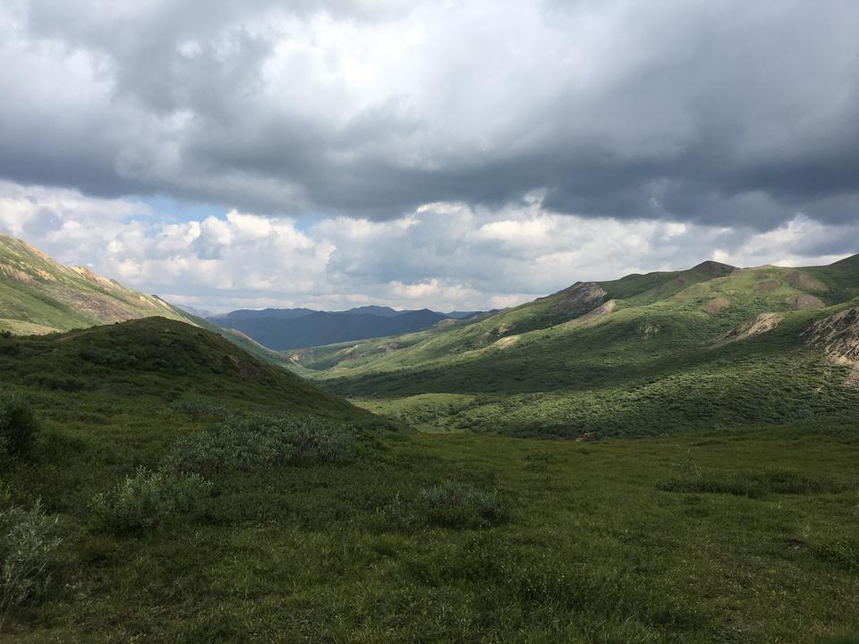Пешеходная тропа вблизи Хейнса Аляска летом