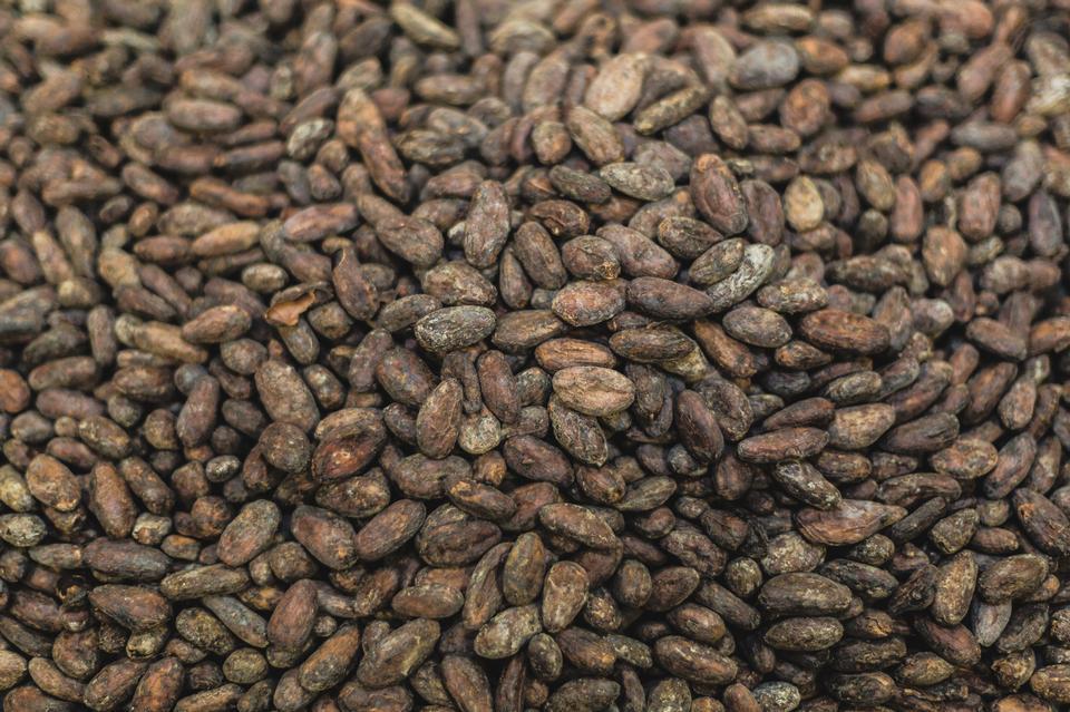 原料和天然幹可可豆