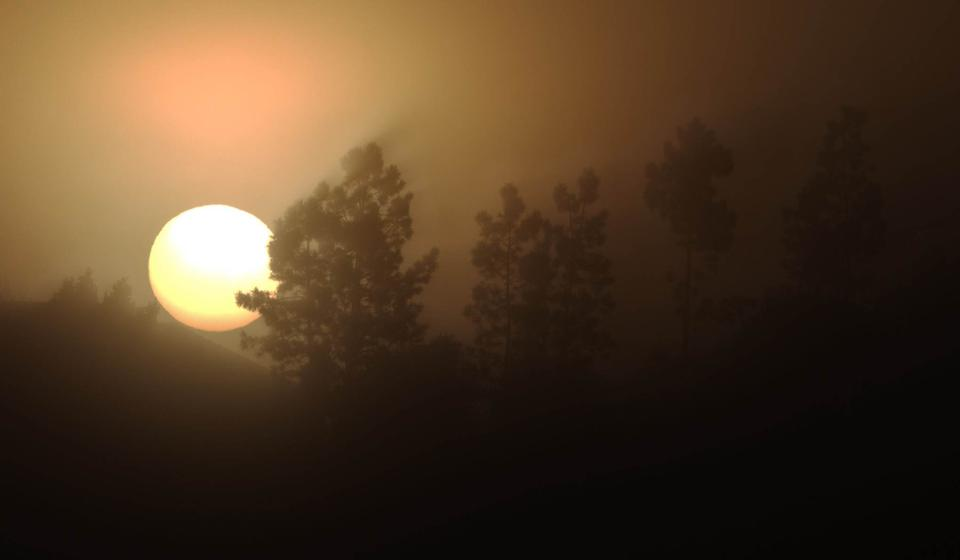 Landscape with trees, sunrise and fog
