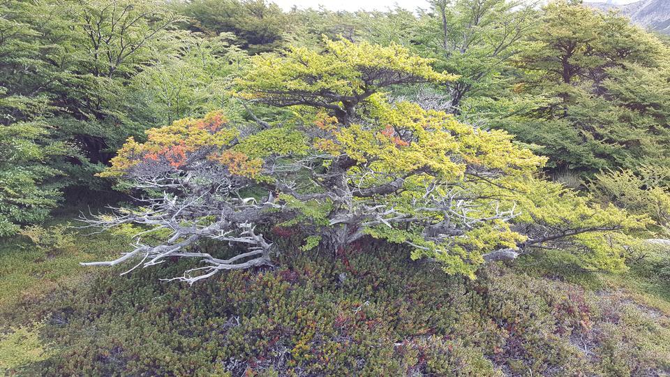 토레스 델 페인 파크의 나무에 밝은 물감