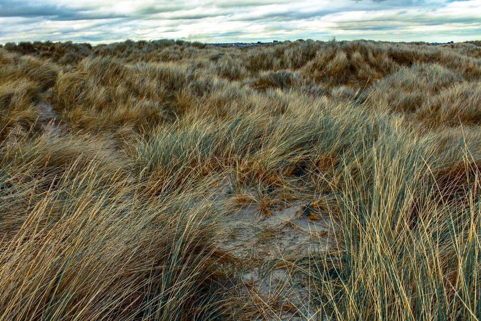 아이슬란드 잔디밭이 바람에 불고있다.