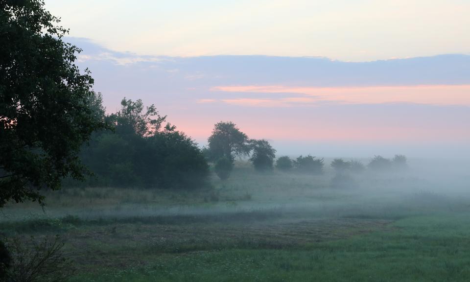 Meadow at dawn near Desenka railway halt.
