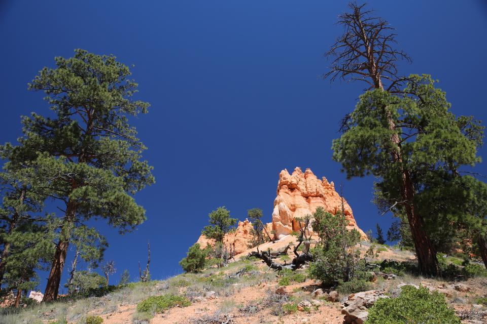Bryce Canyon National Park at Navajo Loop Trail, Utah