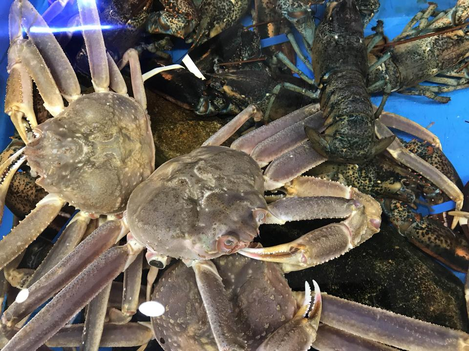 Fresh live crap in water for sell in Korean market
