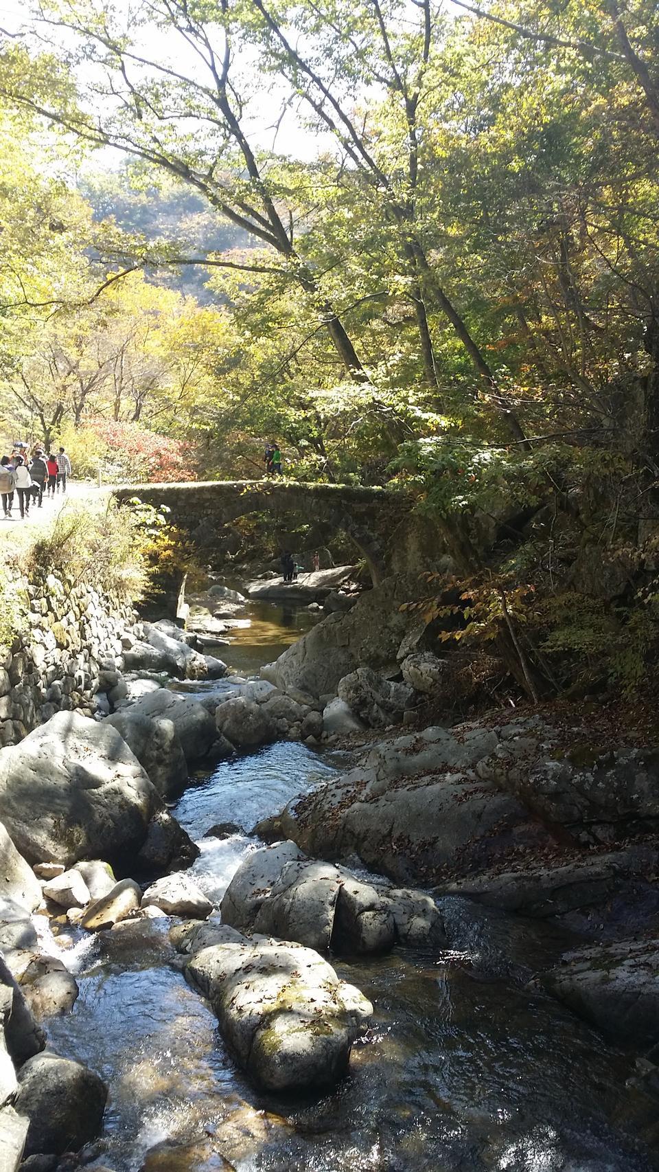 森林河,国家公园美好的风景