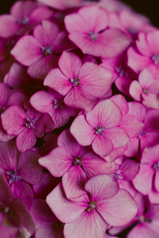 화려한 봄 꽃