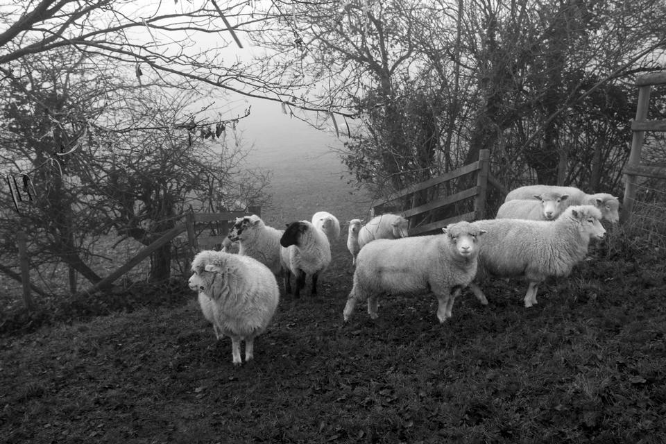 Una oveja negra en la manada de blancos.