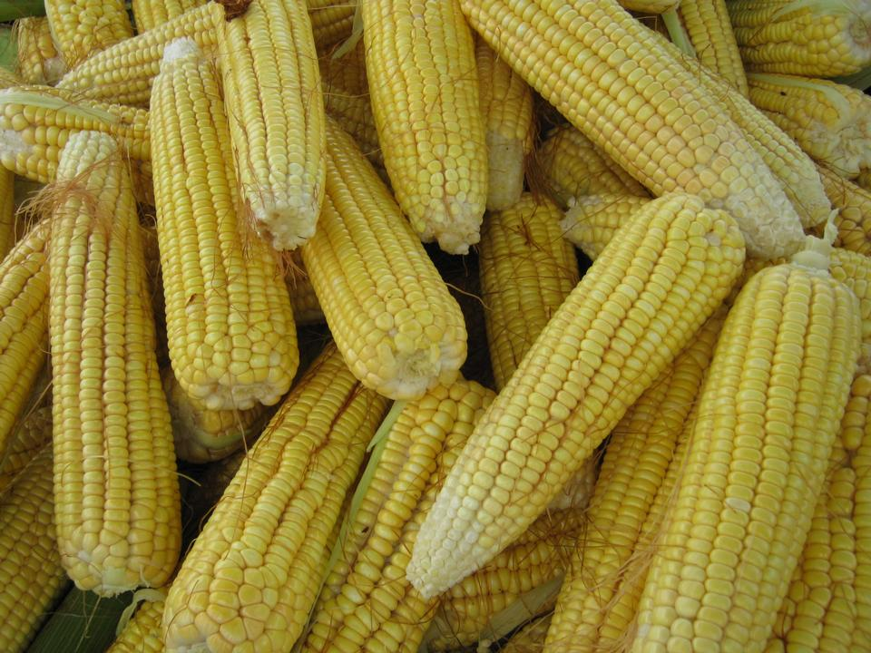 Fresh cooked maize from market