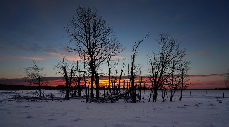 Paesaggio tramonto invernale con albero
