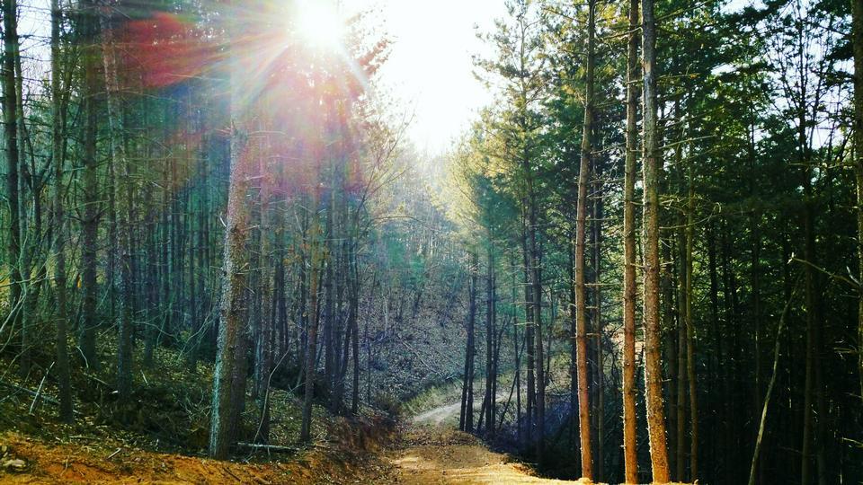 숲 레인, 국가 도로, 경로 위에 빛나는 태양