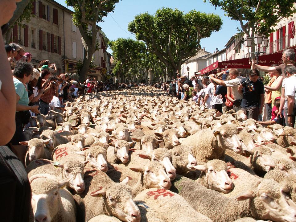 群羊走在街上