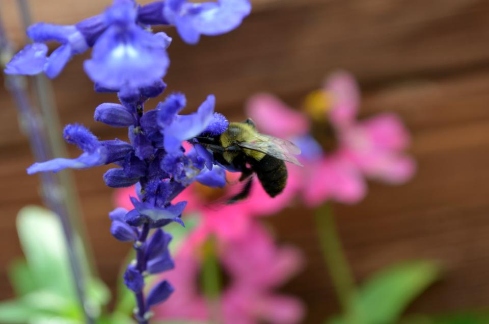 Blumble bee on flower