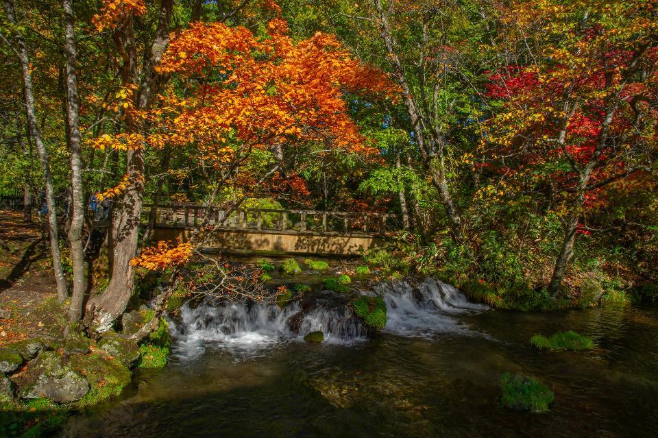 Yusui Park foliage