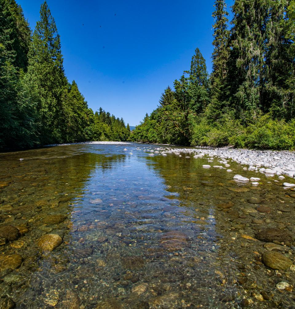 the South Fork Nooksack River