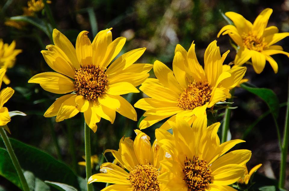 グランドティトン国立公園の野生の花