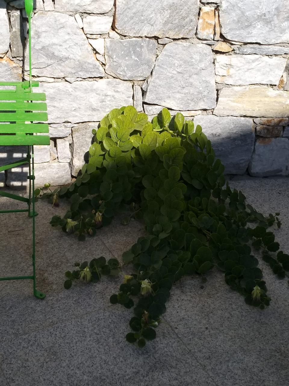 シキノス島ギリシャの夏