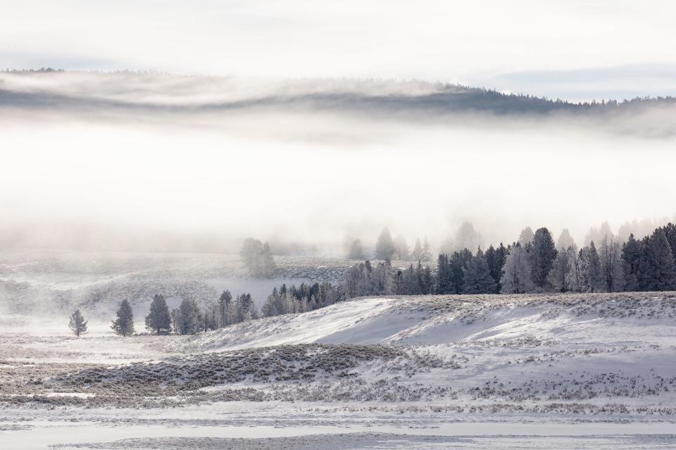Fog and frost in Hayden Valley