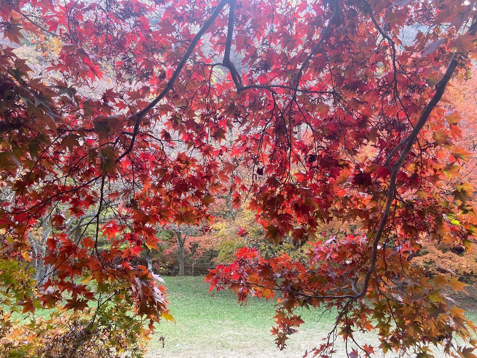 가을 단풍 내장산 국립 공원