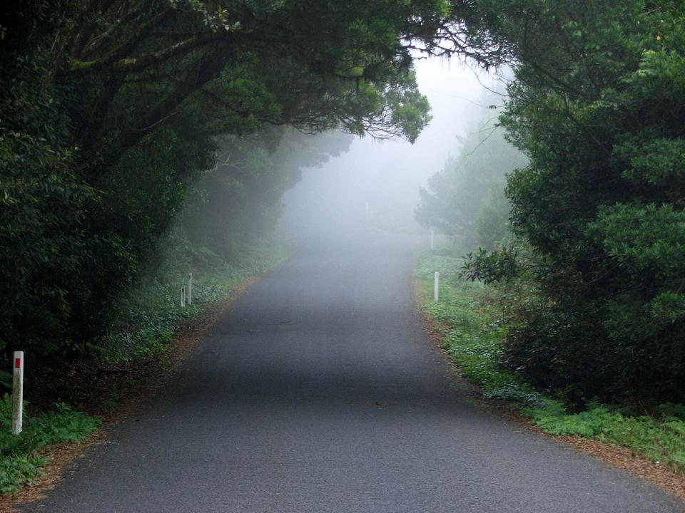 An asphalt road that goes through a misty dark