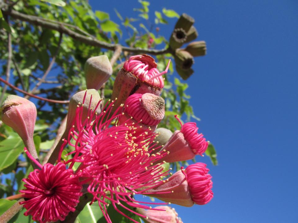 Beautiful flowers on blue sky background