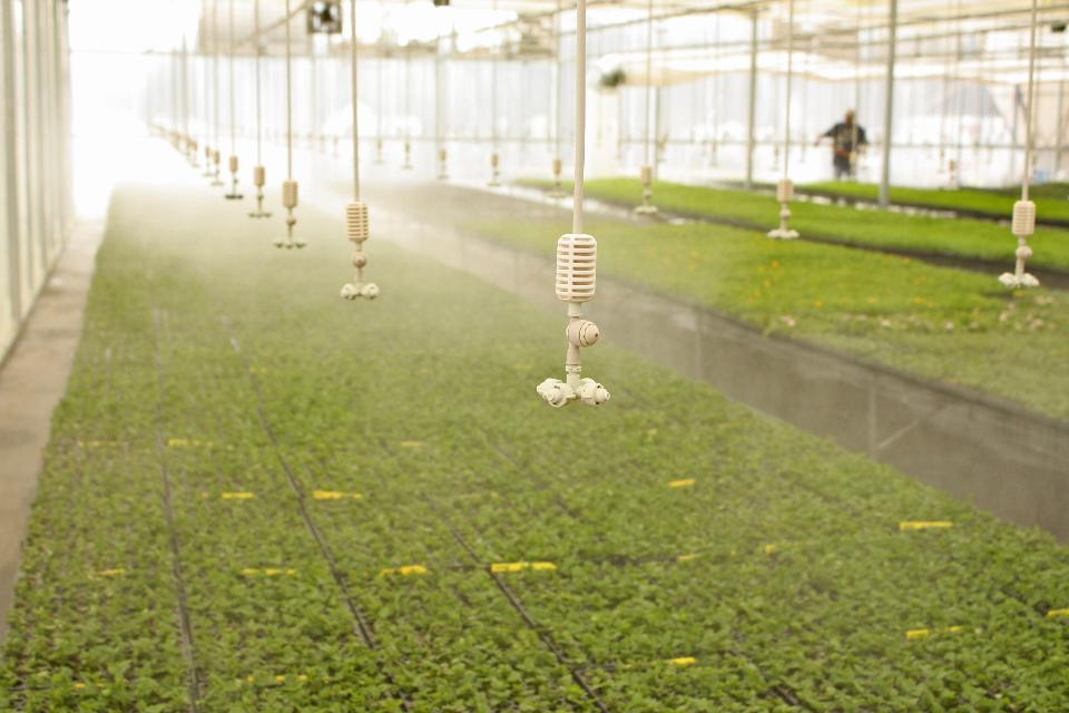 Irrigation in a Greenhouse