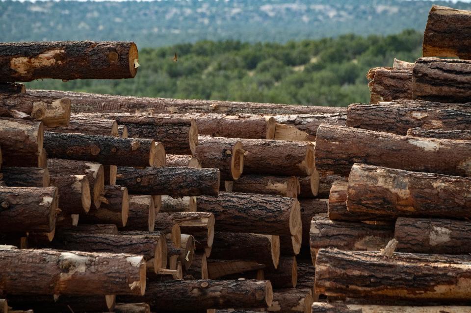 Small diameter tree timber harvested