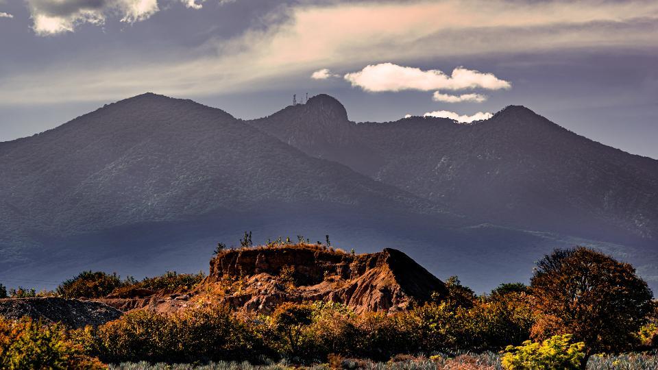 Land of agavera farms