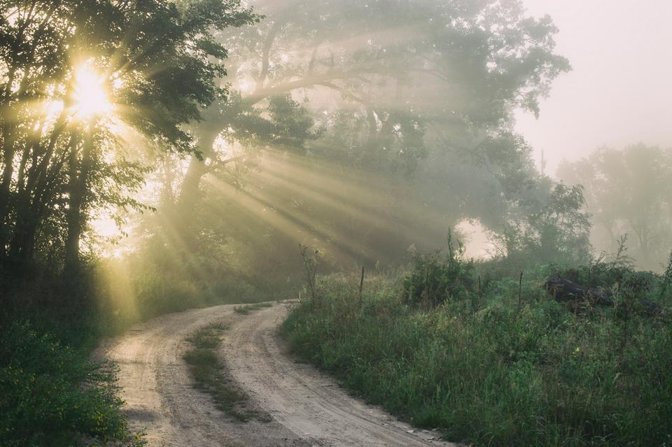 Camino forestal bajo los rayos del sol al atardecer