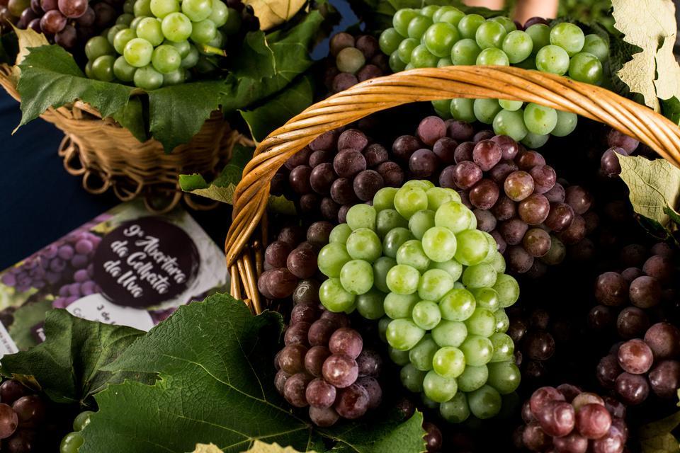 在篮子的有机未加工的红葡萄