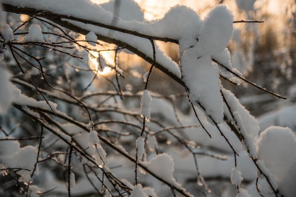 ふわふわの雪で覆われた木の枝