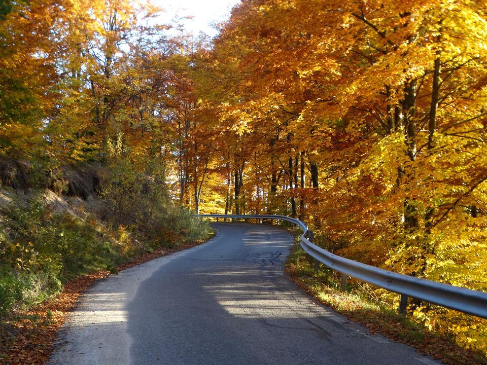 Caminho, guiando, através, a, outono, floresta, ligado, um, ensolarado, tarde atrasad