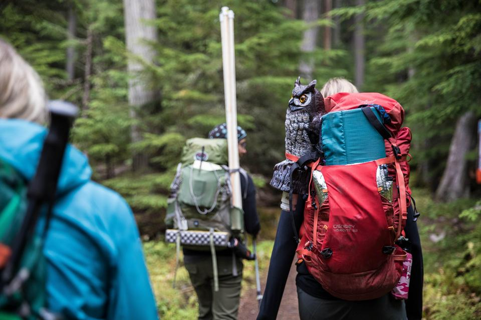 Group of tourists with backpacks descends mountain trail