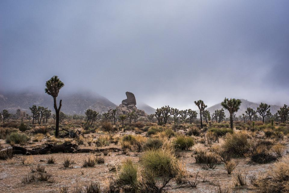 Boulders and Joshua Trees in Joshua Tree National Park