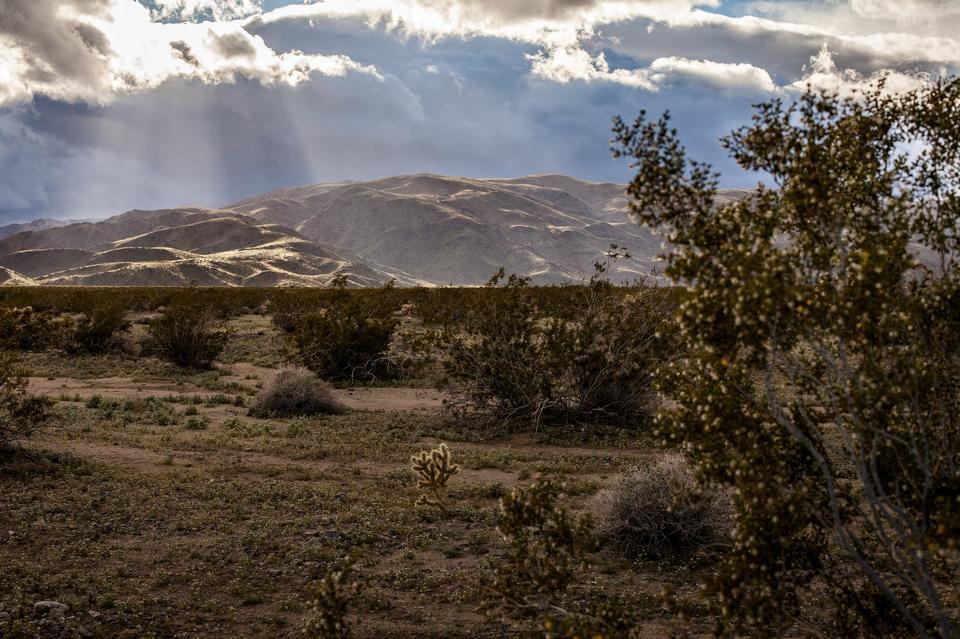 约书亚树国家公园的巨石和约书亚树
