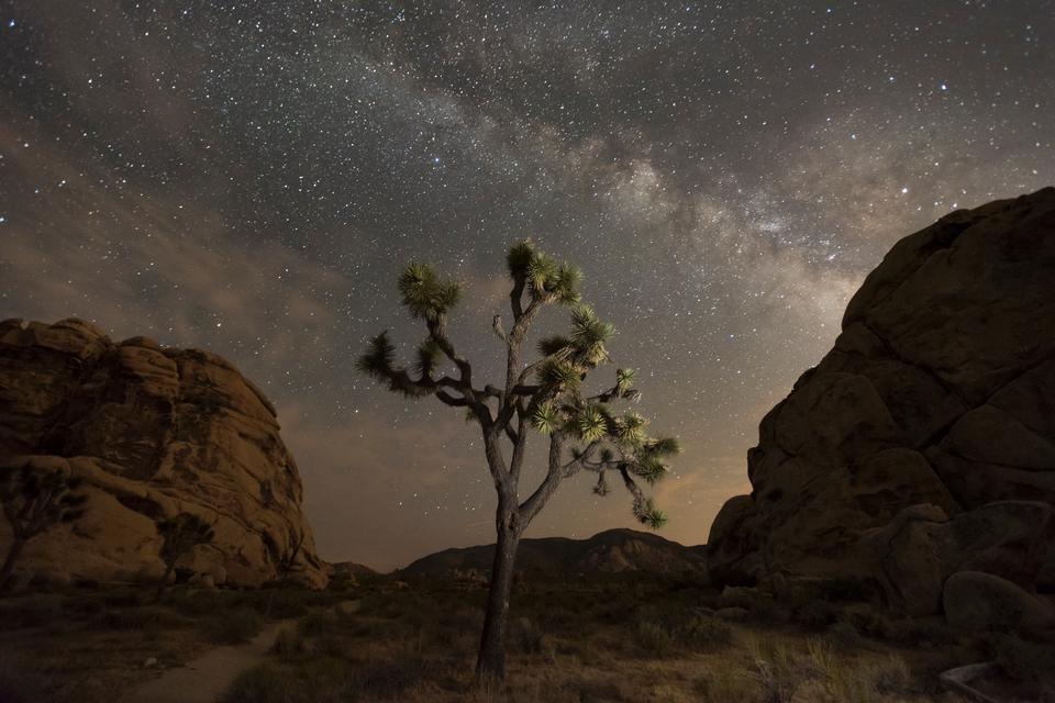 조슈아 트리 국립 공원의 밤하늘
