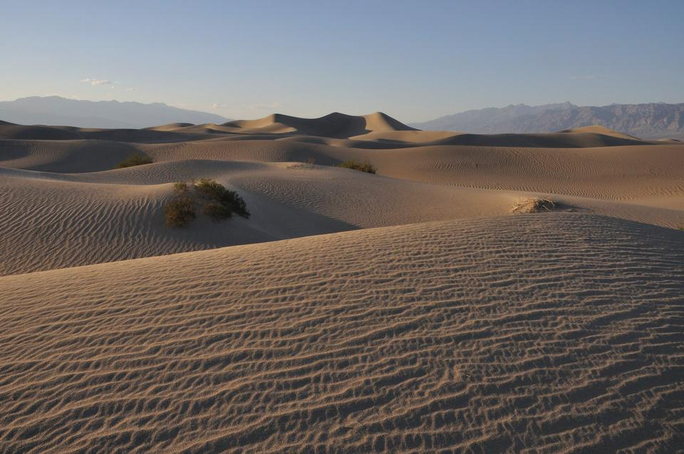 豆科灌木平沙丘