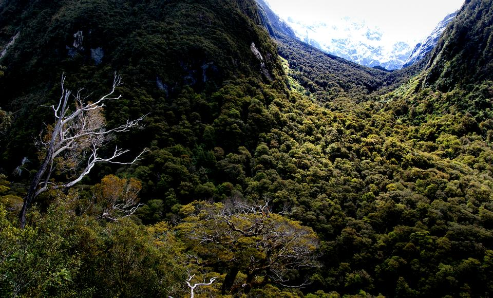 Marian Valley Fiordland National Park