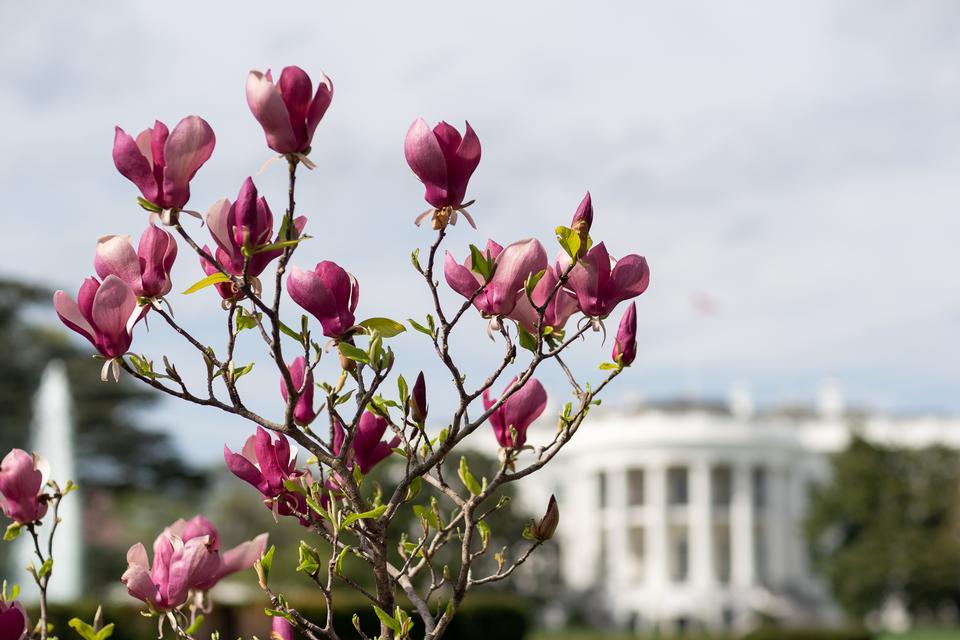 春天在白宫