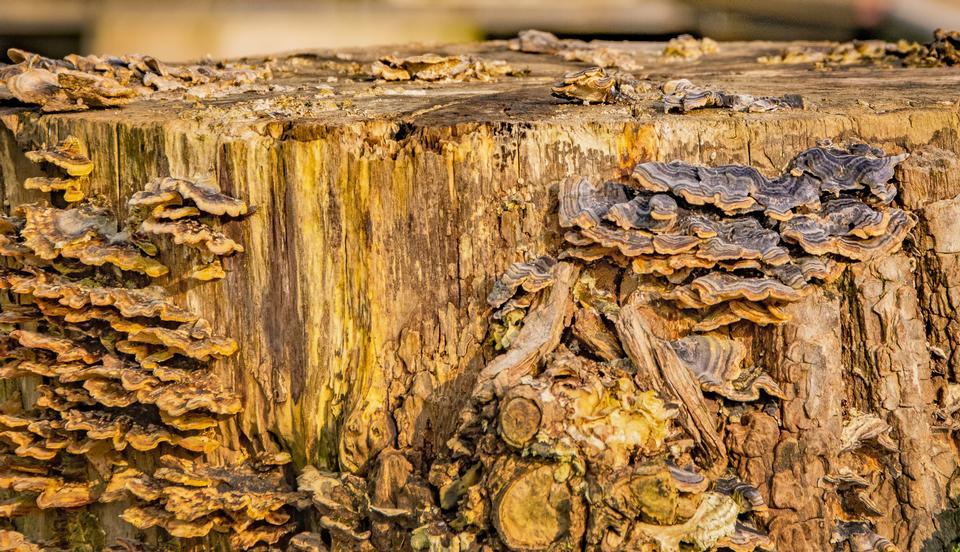 死树和灌木站立