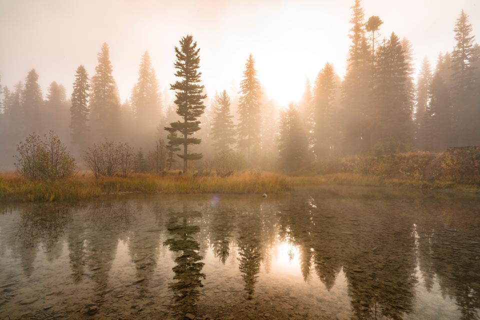 蒙大拿州的扁平頭國家森林