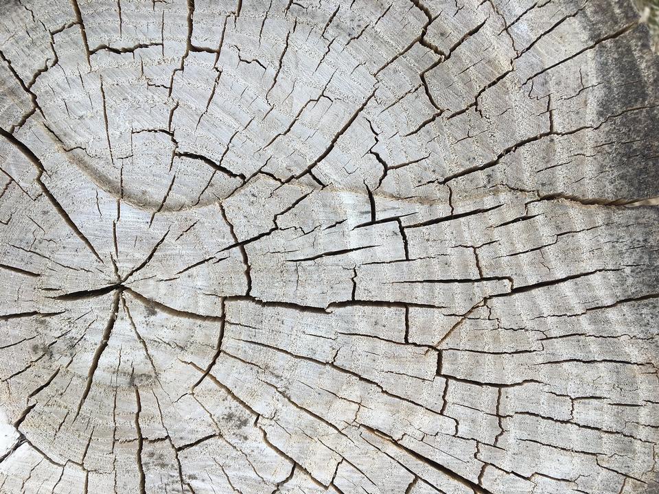 tree cracks