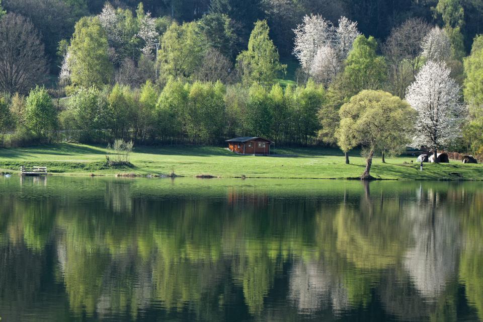 산 숲 호수 반사 풍경