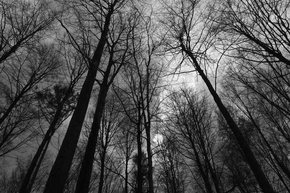 空に浮かぶ春の森