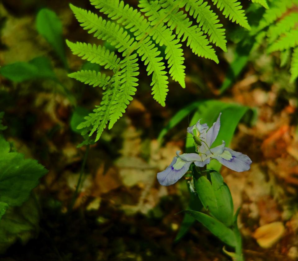 小gree树植物在森林里